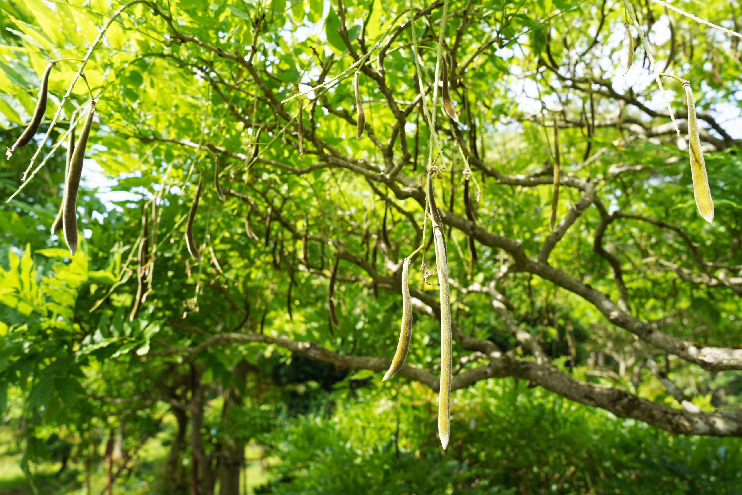 【草刈りピクニック2021】後日談